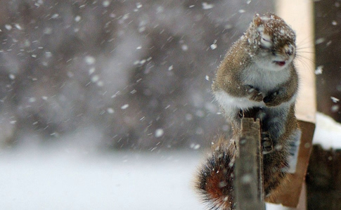 Мокрий сніг та дощ: синоптики розповіли про погоду на вихідних