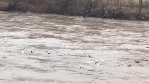 Сміття із Закарпаття пливе річкою до Угорщини: за пів дня - зібрано понад 60 тон