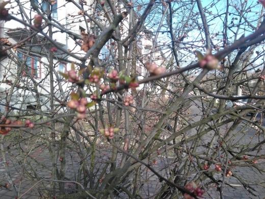 На Закарпатті розцвітають перші весняні квіти