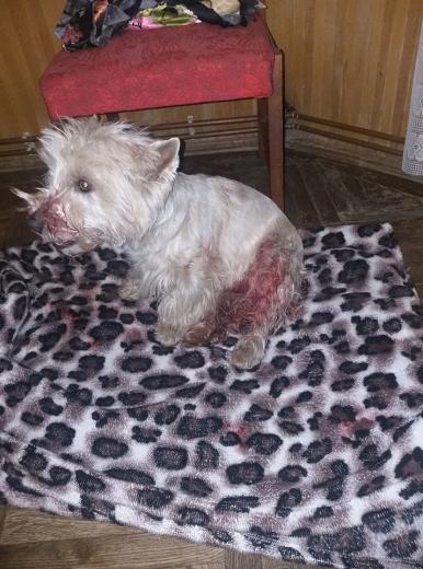 В Ужгороді жінку покусали собаки: власників собак розшукують