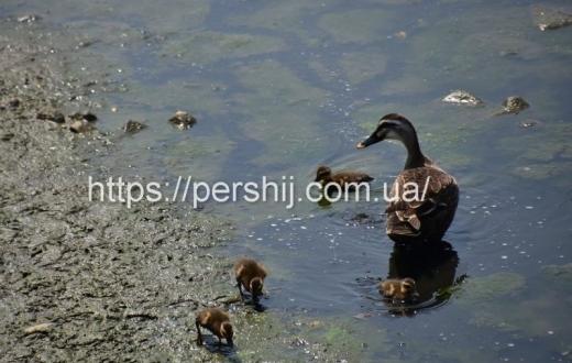 Проблема стічних вод на Закарпатті: як усунути забруднення водойм