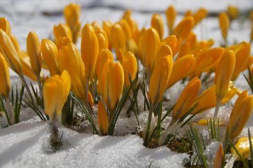 Синоптики розповіли про погоду в Україні у найближчі дні