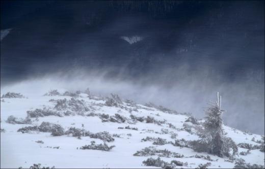 ДСНС попереджає про штормовий вітер та хуртовини в Карпатах