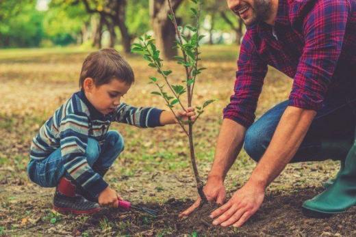 Міненерго хоче за один тиждень висадити 10 мільйонів дерев