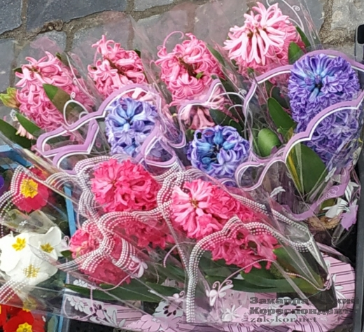 Тюльпани-фаворити: в центрі Ужгорода – стихійний продаж квітів (фотофакт)