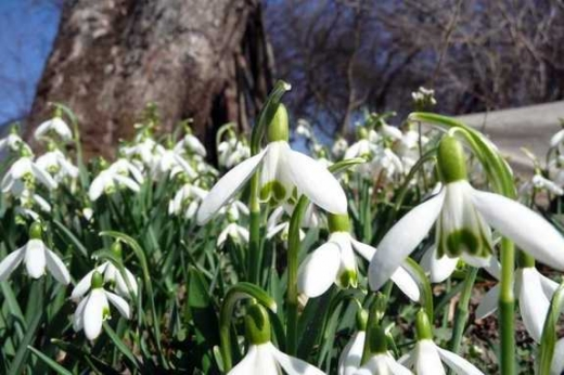 Весняне тепло та дощі: якою буде погода в Україні 7-11 березня