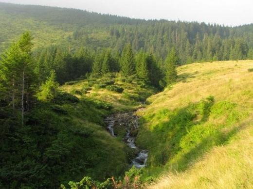 4 земельні ділянки на полонинах Довга та Драгобрат перебували незаконно у приватній власності