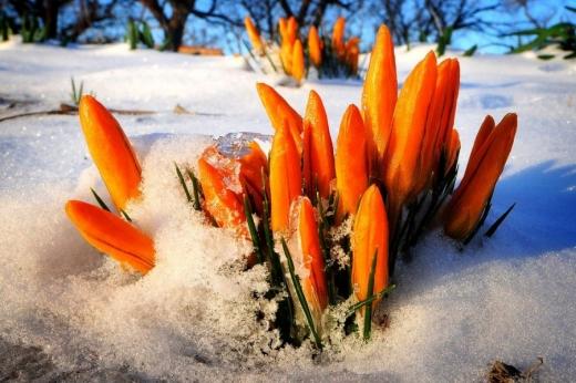 Погода у вихідні. В Україну йдуть заморозки і сніг