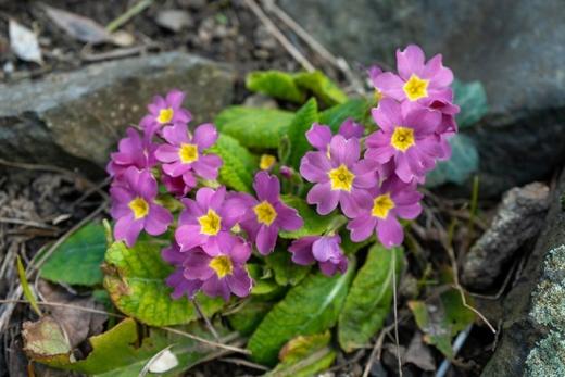 Весна в ужгородському ботанічному саду: фоторепортаж