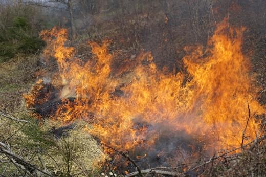 Лісівники просять закарпатців не палити суху траву, аби не загорівся ліс