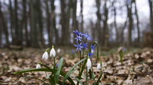 Гойдалки весни: в Україні прогнозують і туманне тепло, і мокрий сніг