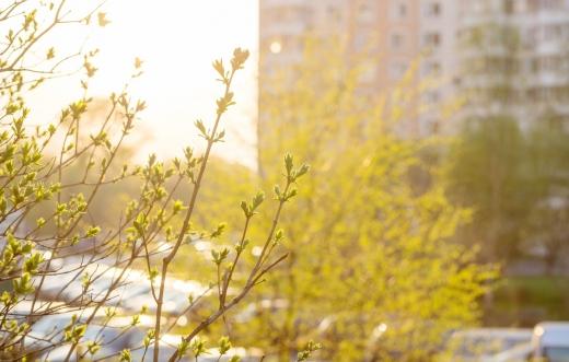 Погода 20 березня: в Україні буде тепло і сонячно, а на Заході дощитиме