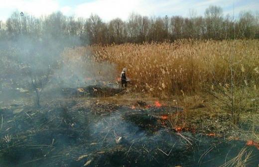 Жителі Закарпаття  продовжують масово нищити довкілля самопалами