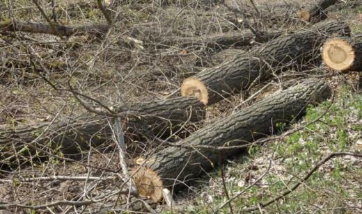 На автотрасі Львів-Самбір-Ужгород ліквідують аварійні дерева