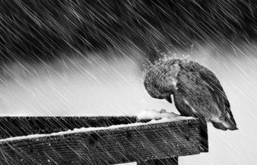 Прогноз погоди на 31 березня: морозна ніч, сніг та поривчастий вітер