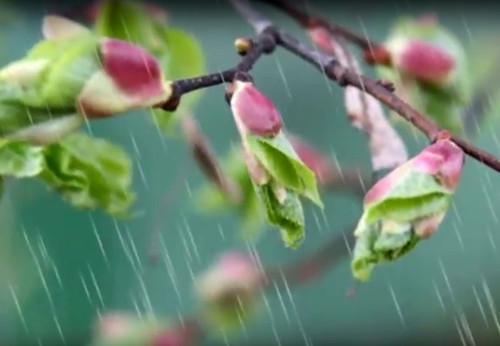 До України повернуться морози і підуть дощі: синоптикиня уточнила прогноз на вівторок