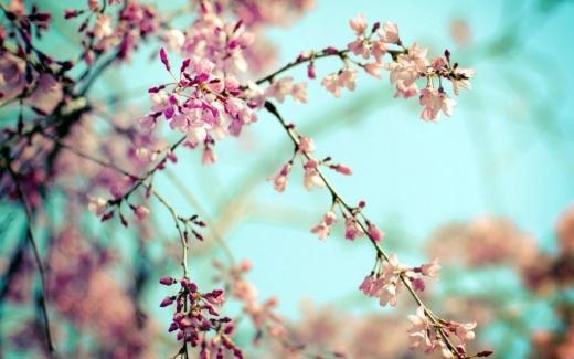Прогноз погоди на 1 квітня: вдень буде сонячно та тепло, а вночі – мороз