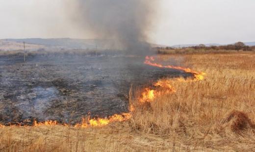 Сумна статистика: вогнеборці оприлюднили, скільки пожеж виникло в екосистемах за добу