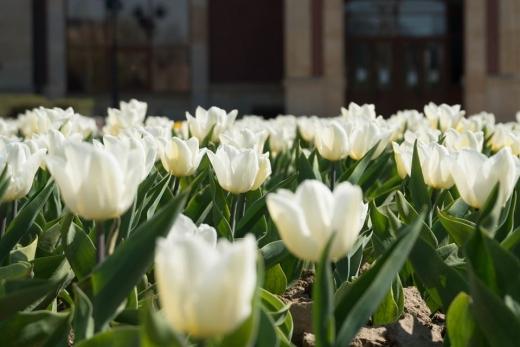 Ужгород весняний: у мережі опублікували чарівні світлини квітучого міста
