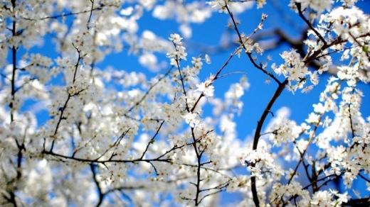 Прогноз погоди на 18 квітня: вдень сонячно і без опадів, а вночі – заморозки