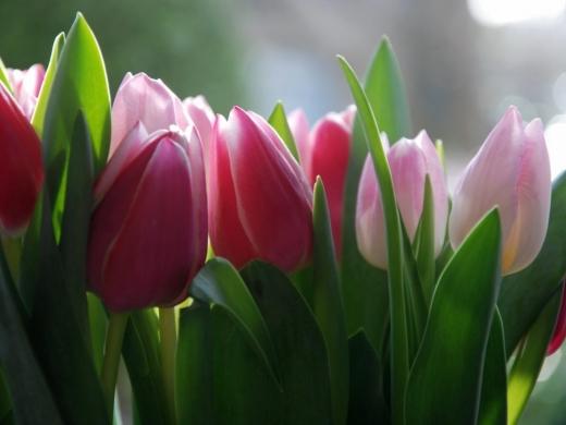 Гороскоп на 19 квітня: час романтики для Риб, Близнюків і Козерогів