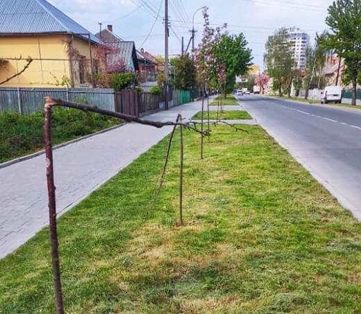 Поліція взялась шукати вандалів, які пошкодили молоді сакури в Ужгороді