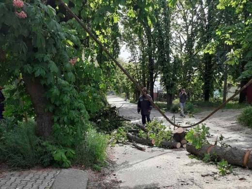 В Ужгороді через пориви вітру дерево впало на газову трубу (ФОТО)