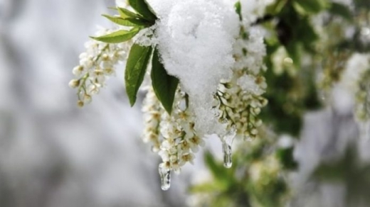 Прогноз погоди на 12 травня: Україну накриє різке похолодання, подекуди можливий сніг та град