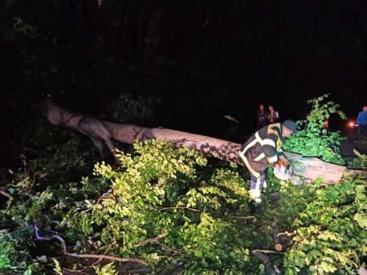 Вночі на Ужгородщині дерево заблокувало рух на автошляху та залізничній колії