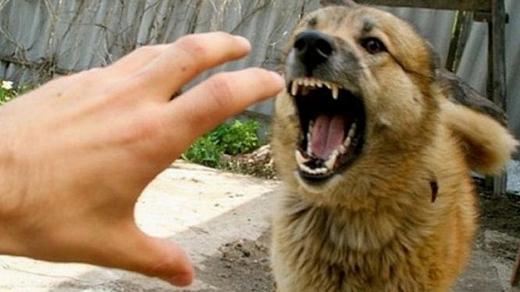 Власника собак покарали через напад на жінку у Виноградові