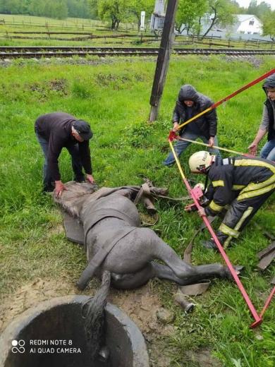 Кінь провалився в каналізаційну мережу на Закарпатті