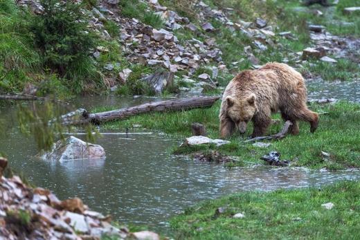 Бурим ведмедям з Синевиру влаштували фотосесію (ФОТО)