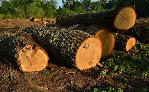 Майстра лісу Іршавського лісгоспу судитимуть за незаконний продаж деревини