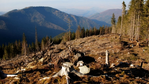 Верховна Рада ухвалила закон про моніторинг та інвентаризацію лісів