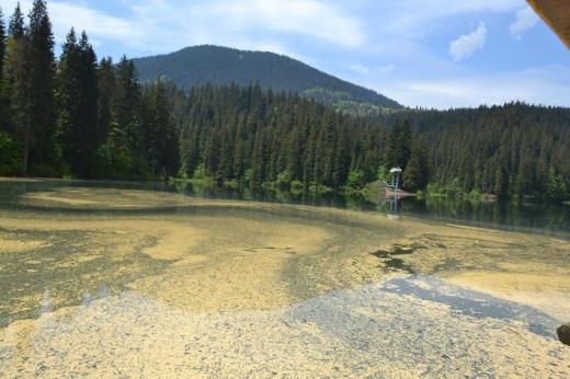 Озеро Синевир змінило свій колір: фото цікавого явища