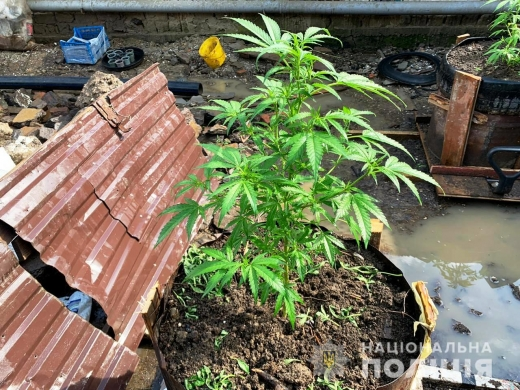 На Виноградівщині припинили незаконну діяльність 28-річного наркоторгівця