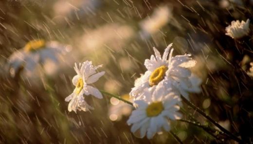 На більшій частині території Закарпаття будуть короткочасні дощі та грози