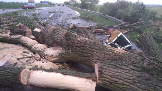 На Ужгородщині на автотрасу впало дерево і перекрило рух транспорту