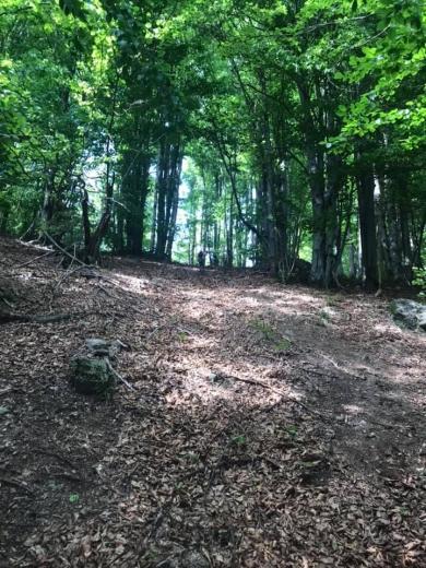 Туристичне Закарпаття: мальовничий маршрут до таємничої гори Кобила