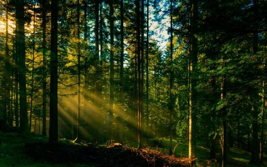 Зеленський підписав закон про інвентаризацію лісів
