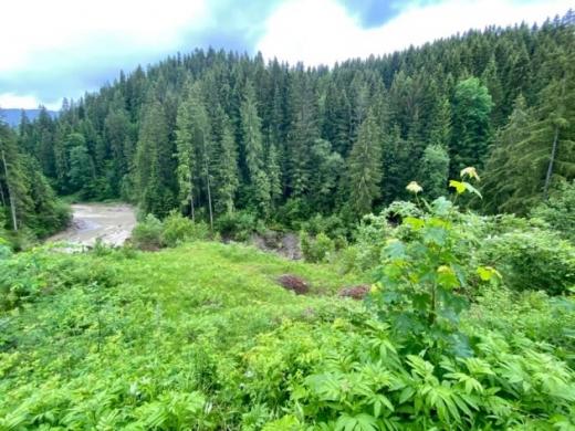 Через зсуви ґрунту в Карпатах зникло озеро