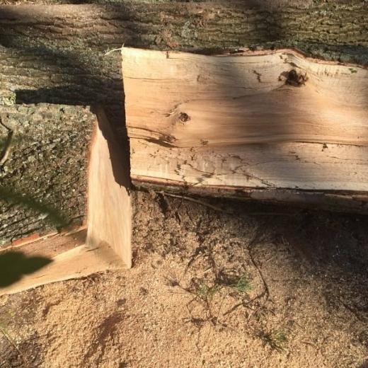На Перечинщині прокуратура погодила підозру двом чоловікам, які незаконно порубали дерева дубу