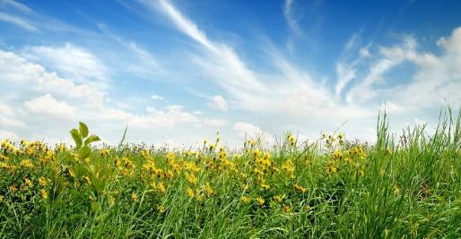 Прогноз погоди на 28 липня: в Україні переважно буде сонячно й тепло