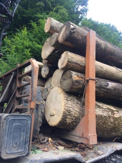 Незаконне перевезення деревини невідомого походження розслідують закарпатські правоохоронці