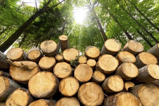 На Закарпатті запустять пілотний проєкт з продажу деревини