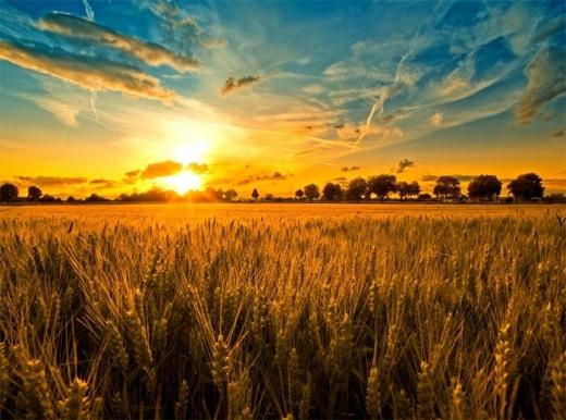 Яким буде серпень в Україні: прогноз погоди від синоптиків