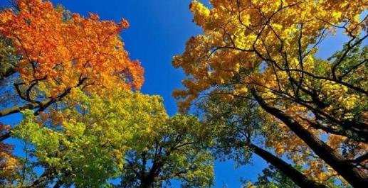 Синоптики дали прогноз погоди на вересень