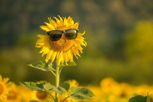 Погода 4 серпня. Україну накриє спека