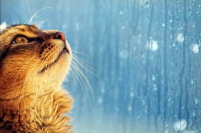 Погода погіршиться – в яких областях прогнозують зливи