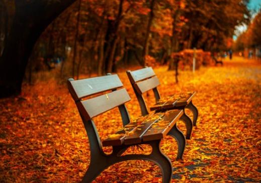 Перший день жовтня буде по-справжньому осіннім: прогноз погоди